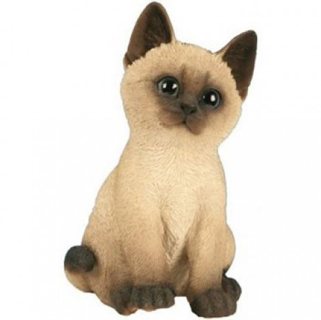 CHATON ASSIS BEIGE 20CM