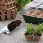 Comment faire vos semis pour le jardin ?